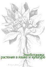 Коллектив авторов - Этноботаника: растения в языке и культуре